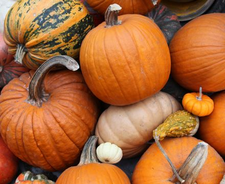 Pumpkin season blog
